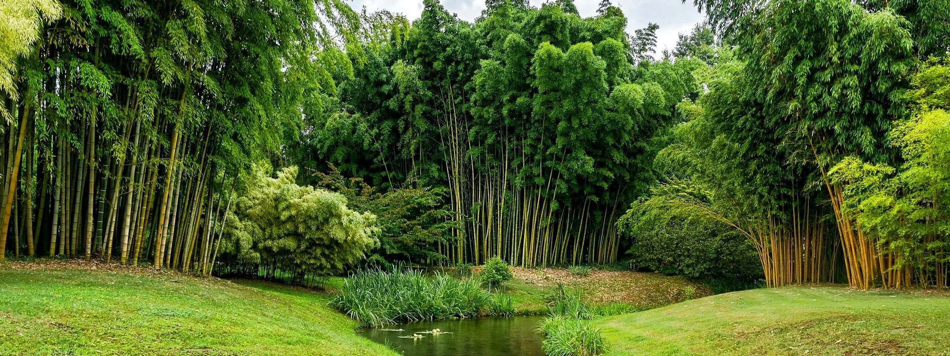 bambus-slider-2