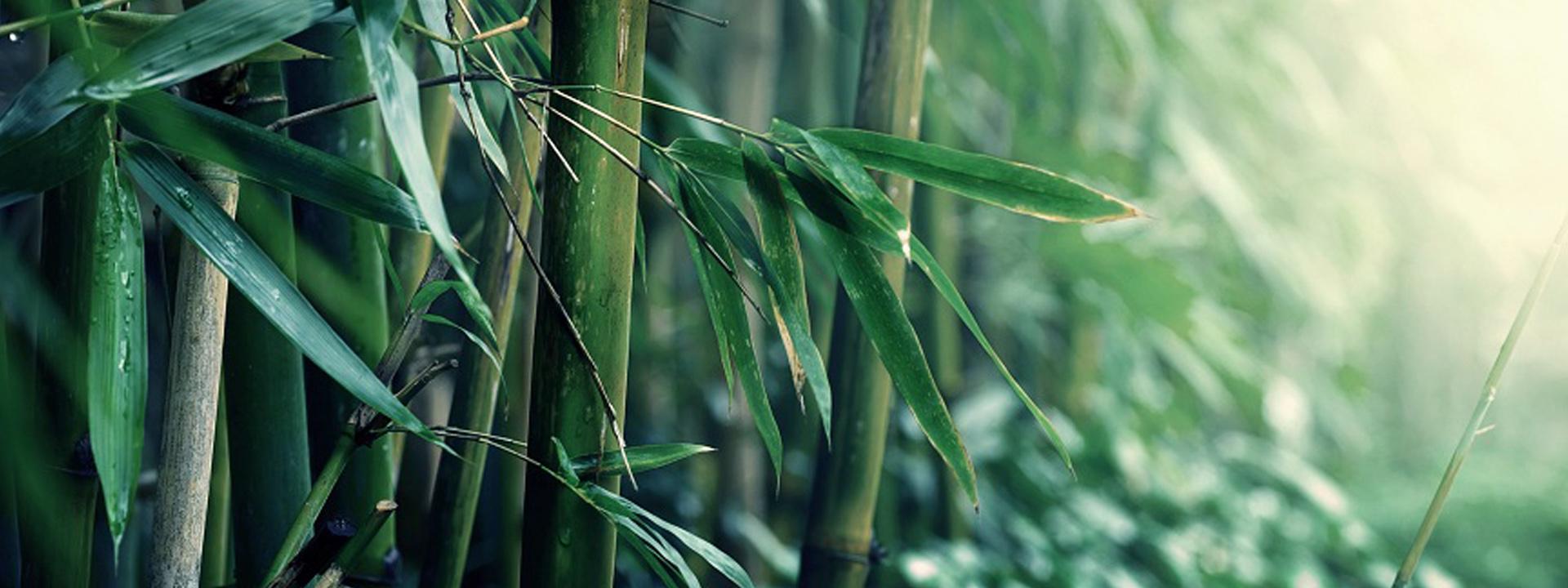 bambus-slider